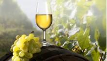 Pinot bianco DOC Collio